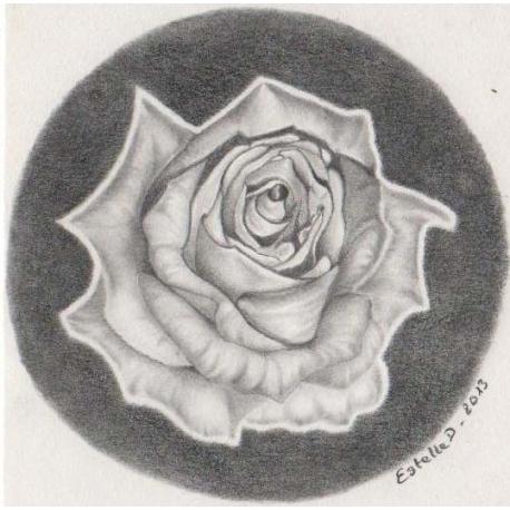 Rose en noir et blanc